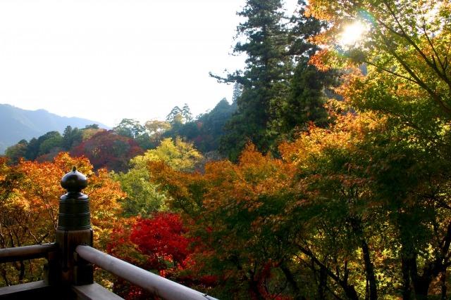 鎌倉に行くなら外せないスポット長谷寺の紅葉が見ごろになるのはいつ