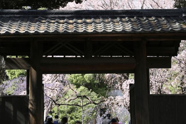 六義園のお花見はシートや宴会が禁止!?桜の楽しみ方や周り方を紹介