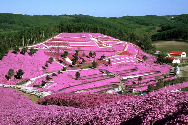 東藻琴芝桜まつりの見頃の時期と見どころ!中鉢さんが作り出した絶景