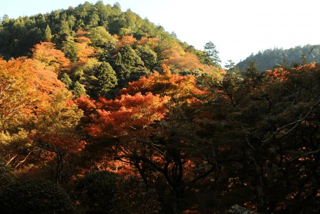 京都の紅葉を車で巡ろう!駐車場の実際とカップルに最適な観光コース