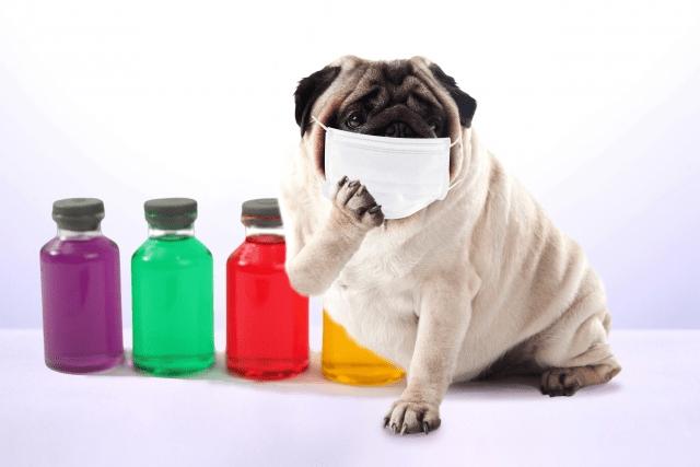 インフルエンザのワクチンは今年も足りないのか?を病院で聞きました