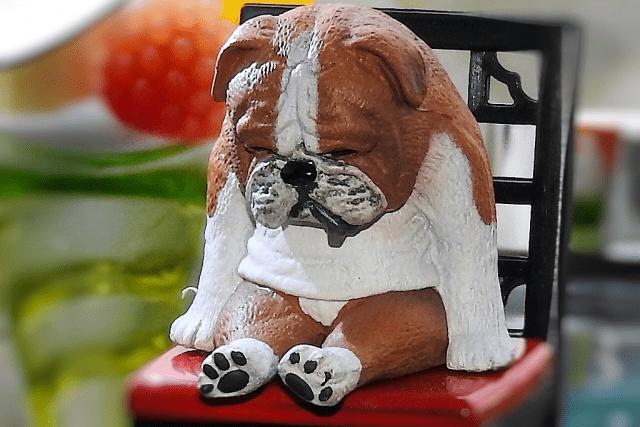 犬がカーペットにおしっこ!粗相の掃除法とトイレを覚えない時の対応